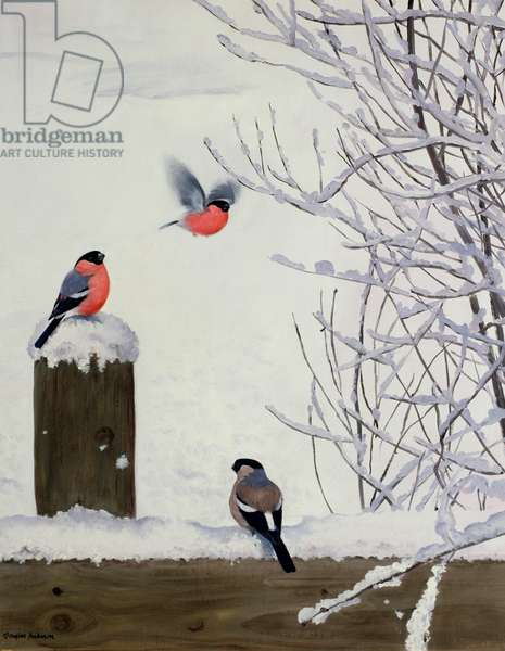 Bullfinches on a Snowy Fence