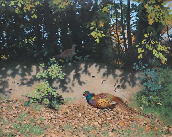 Pheasant Dusting in Autumn Sun, 2000 (oil on board)