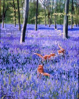 Fox Cubs in a Bluebell Wood