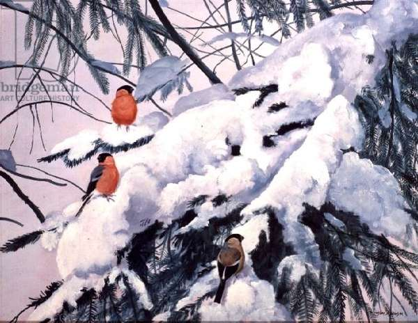 Bullfinches on a Snowy Branch