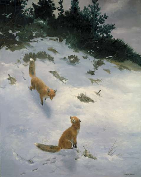 Love at First Sight, Foxes in the Snow