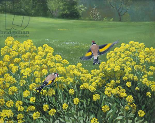 Goldfinches, 2000 (oil on board)