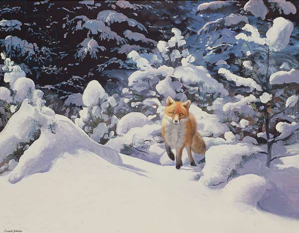 Fox in Deep Snow with Fir Trees