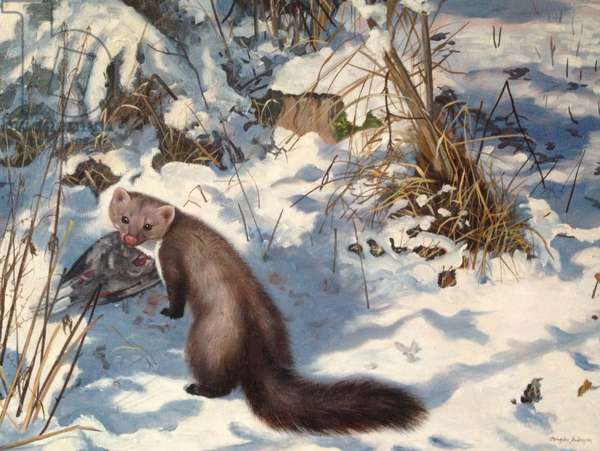 Stone Marten in the Snow (oil on canvas)