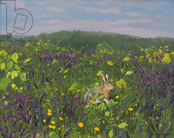 Hare in Vines and Vetch 2000 (oil on board)
