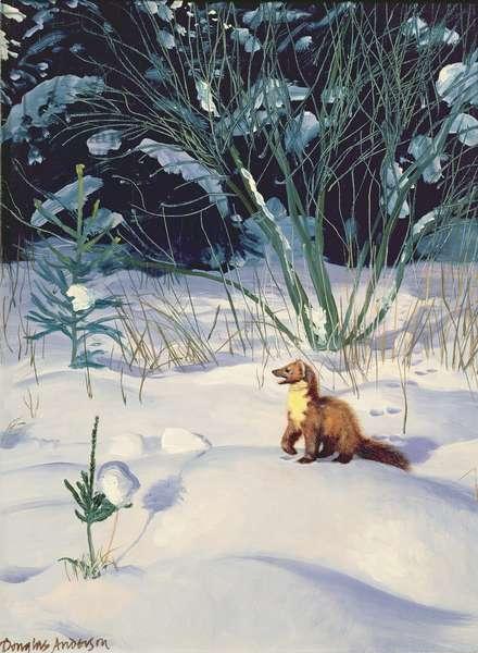 Pine Marten in Snow