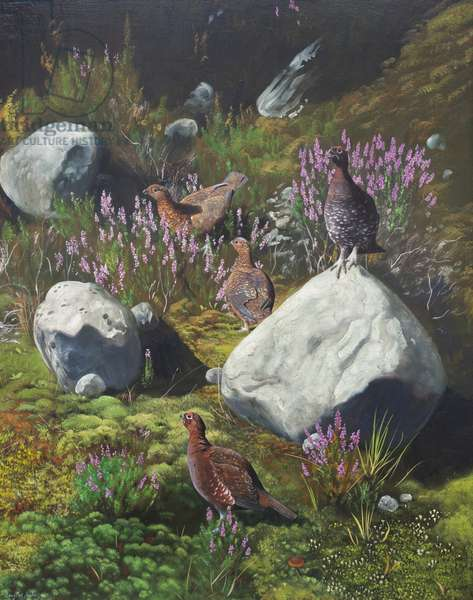 Grouse in Heather, 1982 (oil on board)