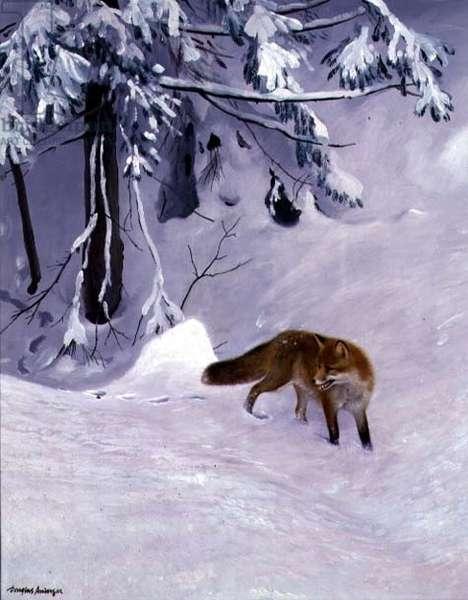 Fox in a Snowy Wood