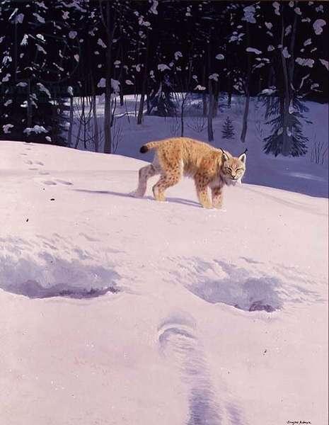 Lynx in Deep Snow