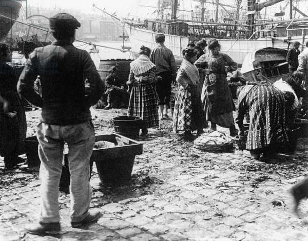 Arrival of the fish after the fishing on the docks in Marseille south of France c. 1900