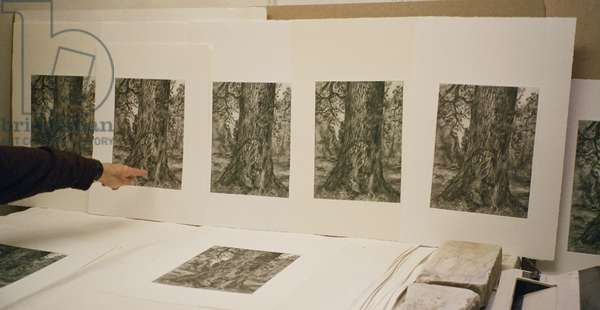 Proofing 'After Constable's elm', 2003 (photo)
