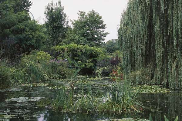 Water lily pond, garden of the house of Claude Monet (1840-1926), Giverny, Haute-Normandie, France