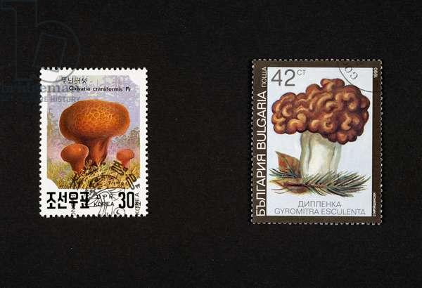 Postage stamps honoring mushrooms: left, postage stamp depicting Calvatia craniformis, 1991, North Korea, right, postage stamp depicting Gyromitrs esculenta, 1990, Bulgaria, North Korea and Bulgaria, 20th century