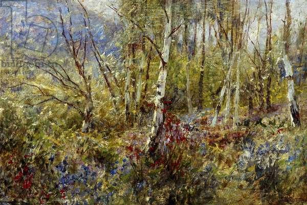 Woodland, by Ludovico Cavaleri (1867-1942), oil on panel, 50x75 cm