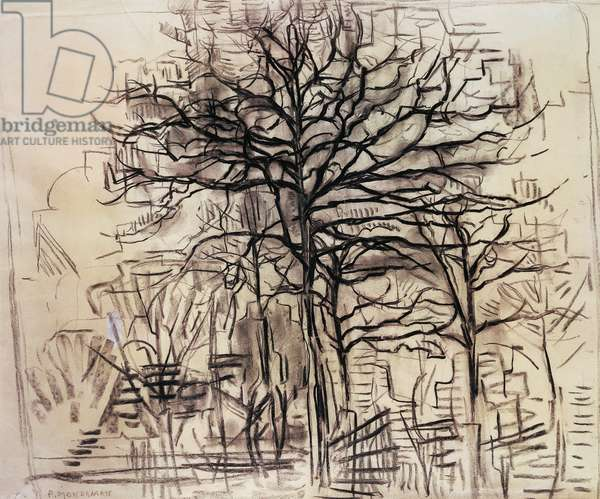 Study of trees, by Piet Mondrian (1872-1944), charcoal and white lead drawing. Netherlands, 20th century.