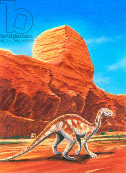 Thecodontosaurus sp, Thecodontosauridae, Late Triassic. Artwork by J Dang (photo)