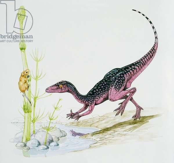 Procompsognathus triassicus, Coelophysidae, Triassic. Artwork by Graham Rosewarne (photo)