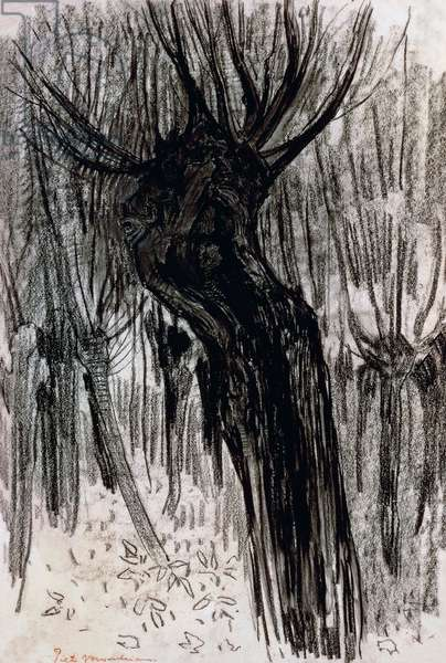 Willows, 1902-1904, by Piet Mondrian (1872-1944), drawing. Netherlands, 20th century.