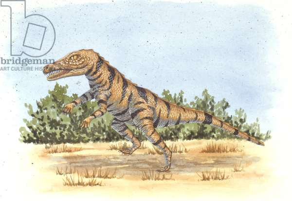Palaeozoology, Triassic period, Dinosaurs, Gracilisuchus, illustration by Mark Stewart (photo)