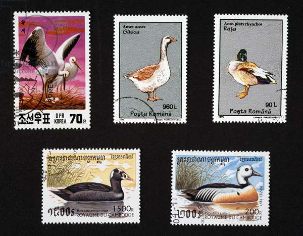 Postage stamps honoring waterfowl Cambodia, North Korea, Romania and Cambodia, 20th century