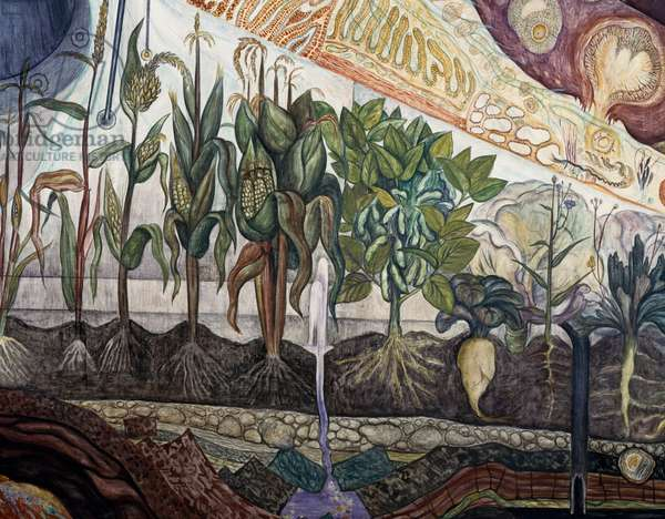 The plant world domesticated by man, detail from Man at the crossroads, looking with hope and high vision to a new and better future, by Diego Rivera (1886-1957), fresco from the Palace of Fine Arts, Mexico City. Mexico, 20th century.