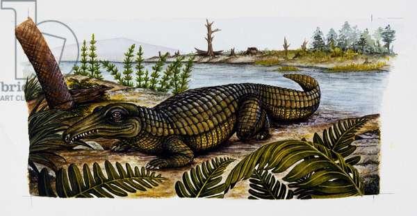 Proterosuchus sp, Proterosuchidae, Triassic, Illustration (photo)