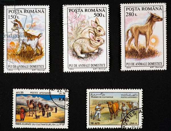 Postage stamps depicting goat, two rabbits and colt, commemorating Day of Agriculture with camels and cattle, Romania and Afghanistan, 20th century