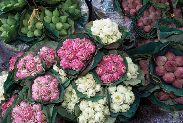 Bunches of flowers at flower market stall, Bangkok, Thailand