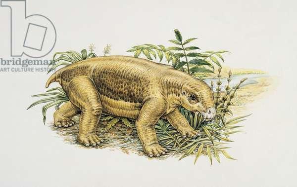 Lystrosaurus in a bush (photo)