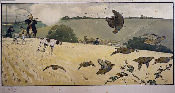 Partridge hunting, engraving by Cecil Aldin (1870-1935)
