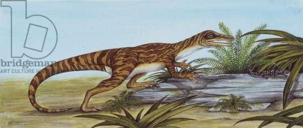 Palaeozoology, Triassic period, Dinosaurs, Staurikosaurus (Staurikosaurus pricei), illustration (photo)