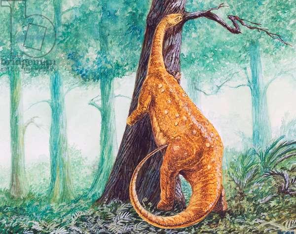 Brontosaurus (Apatosaurus ajax), Diplodocidae, Late Jurassic. Illustration (photo)