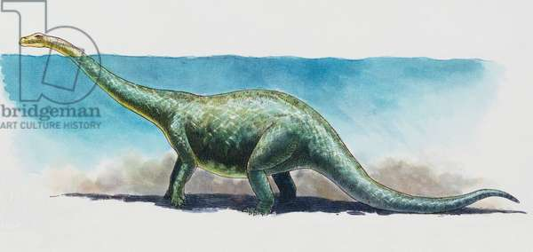 Brontosaurus (Apatosaurus ajax), Diplodocidae, Late Jurassic. Artwork by James Robins (photo)