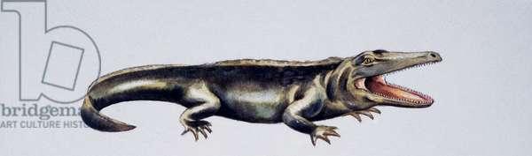 Cyclotosaurus sp, Mastodonsauridae, Late Triassic, Artwork by Peter Ross (photo)