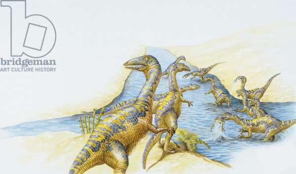 Illustration of Coelophysis in river (photo)