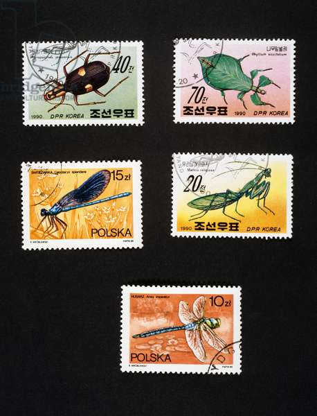 Insects: Bombardier beetle, Spiny leaf insect and Praying mantis, 1990, North Korea, dragonflies, 1998, Poland, North Korea and Poland, 20th century