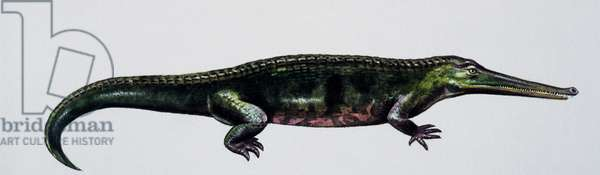Aphaneramma sp, Trematosauridae, Middle Triassic, Artwork by Peter Ross (photo)