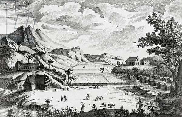 View of a Sugar Plantation, French Antilles, from 'Encyclopedie, ou Dictionnaire raisonné des sciences, des arts et des metiers', by Denis Diderot and Jean-Baptiste Le Rond d'Alembert, 1751-72 (engraving)