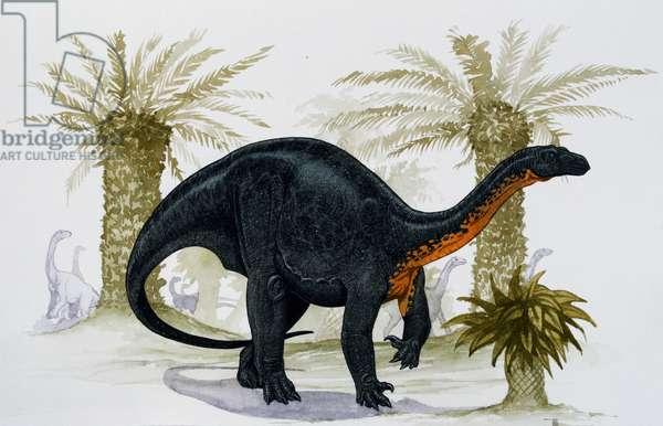 Blikanasaurus cromptoni, Blikanasauridae, Late Triassic, Illustration (photo)