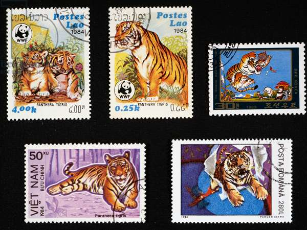 Postage stamps depicting tiger (Panthera tigris) issued by Laos, 1984, North Korea, 1985, Vietnam, 1984, Romania, 20th century