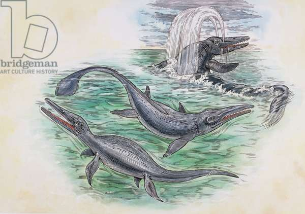 Specimen of Ichthyosaurs order (Ichthyosauria), Triassic-Cretaceous. Artwork by Robin Carter (photo)