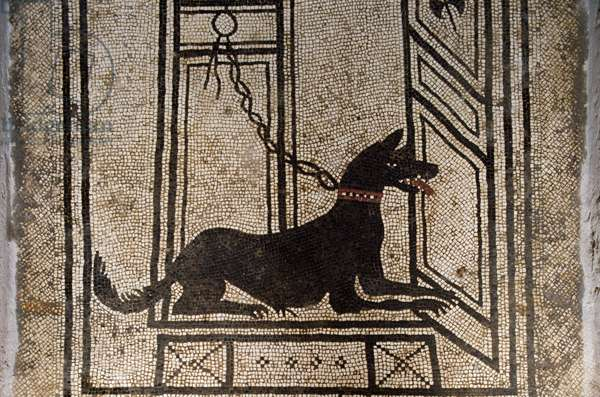Guard dog chained to door, detail from mosaic floor in House of Paquius Proculus or of Cuspius Pansa, Pompeii (UNESCO World Heritage List, 1997), Campania, Italy, Roman civilization, 1st century AD