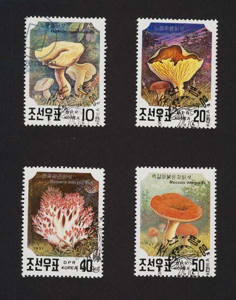 Postage stamps from Mushroom series, 1991, depicting, from left to right and from top to bottom: Hydnum repandum, Phylloporus rhodoxanthus, Ramaria botrytis, Russula intact, North Korea, 20th century