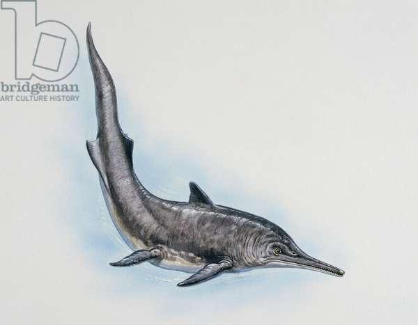 Mixosaurus sp, Mixosauridae, Triassic, Artwork by Tim Haywords (photo)