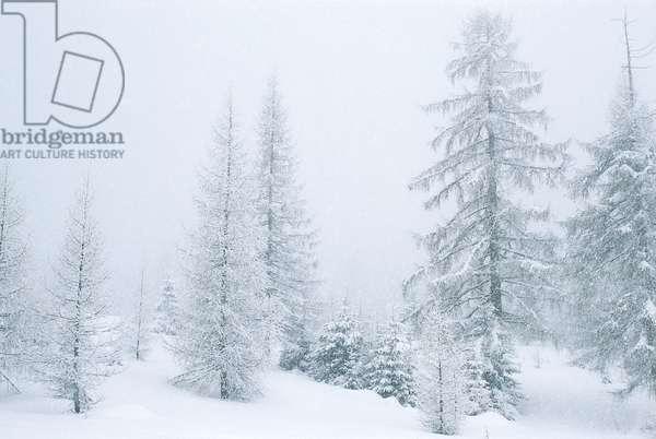 Val Travignolo in snow (photo)
