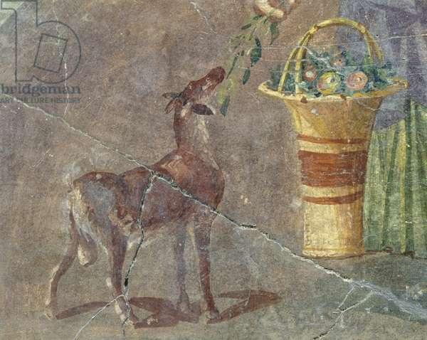 Goat and basket of fruit, fresco from Pompeii, Campania, Italy, Roman civilization, 1st century BC
