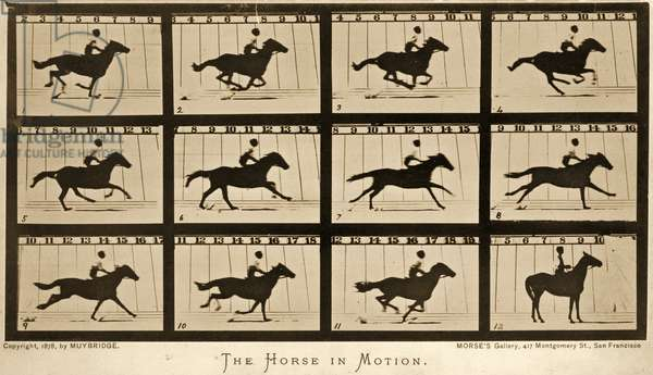 The Horse in motion, 'Animal Locomotion' series, c.1878 (b/w photo)