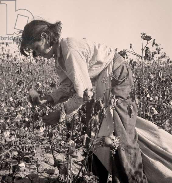 Cotton picker. Southern San Joaquin Valley, California.  1936 (b/w photo)