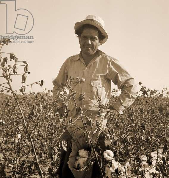 Cotton picker. San Joaquin Valley, California. 1936 (b/w photo)