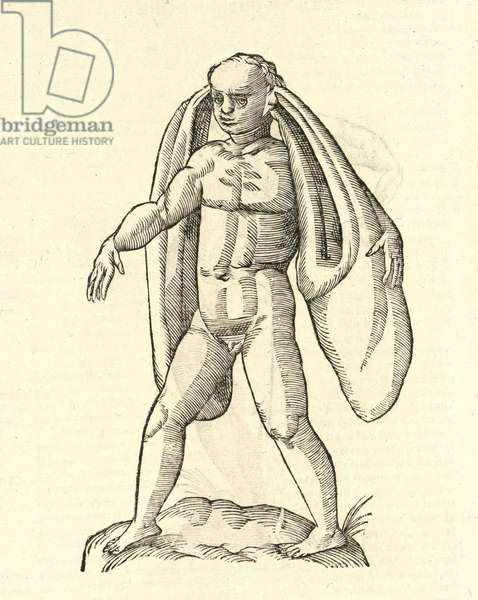 """illustration of """"Homo Fanesius auritus""""  from Aldrovandi's 'History of Monsters' , 1642 (woodcut)"""